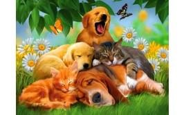 תמונה אכילה חיות 11