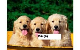 תמונה אכילה כלבים מתוקים 705