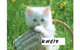 תמונה אכילה חתול 1