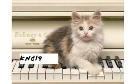 תמונה אכילה חתול 2