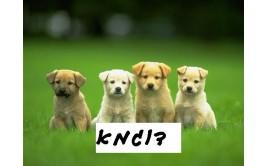 תמונה אכילה כלבים 3
