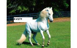 תמונה אכילה סוס 8