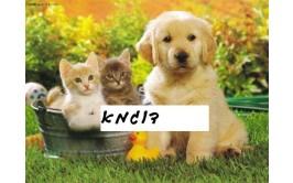 תמונה אכילה כלב וחתול מתוקים